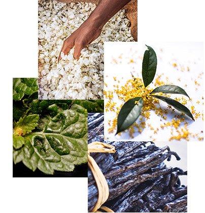 Nachhaltige Inhaltsstoffe